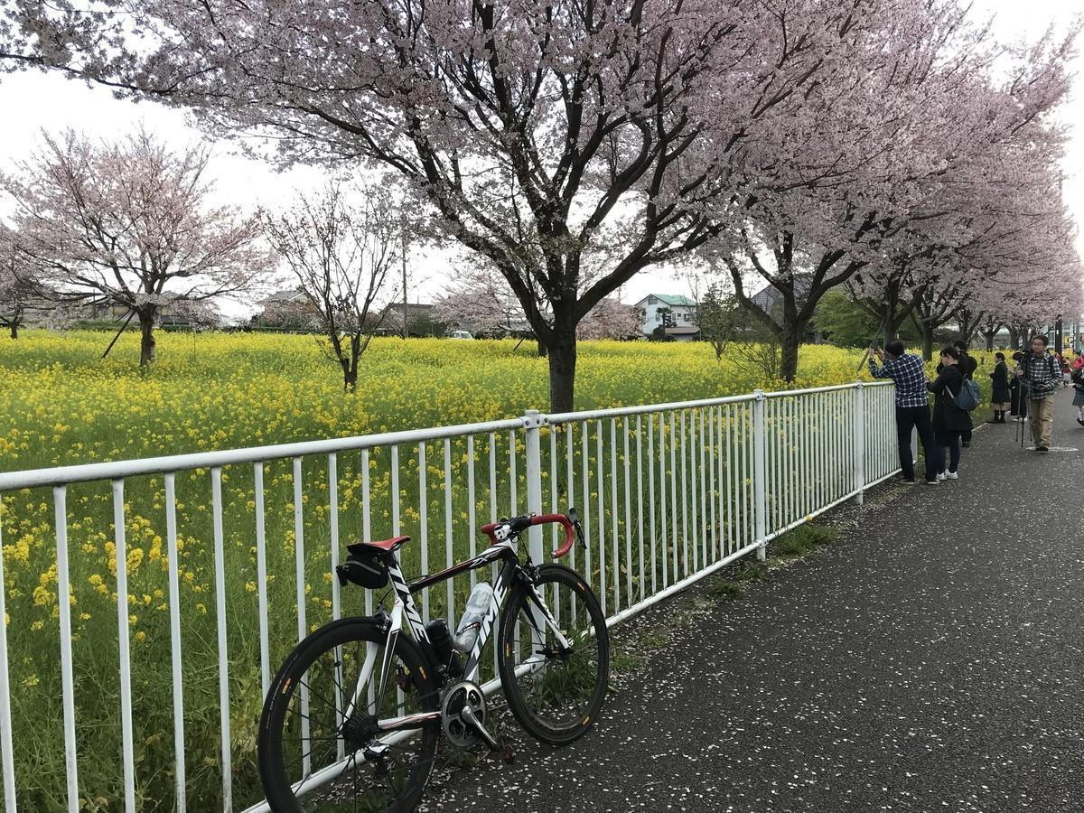 f:id:bean_cyclehorse:20190331224320j:plain