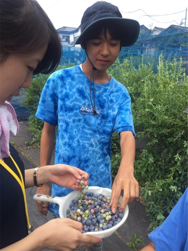 f:id:beans_mame-niwa:20170725224350j:image