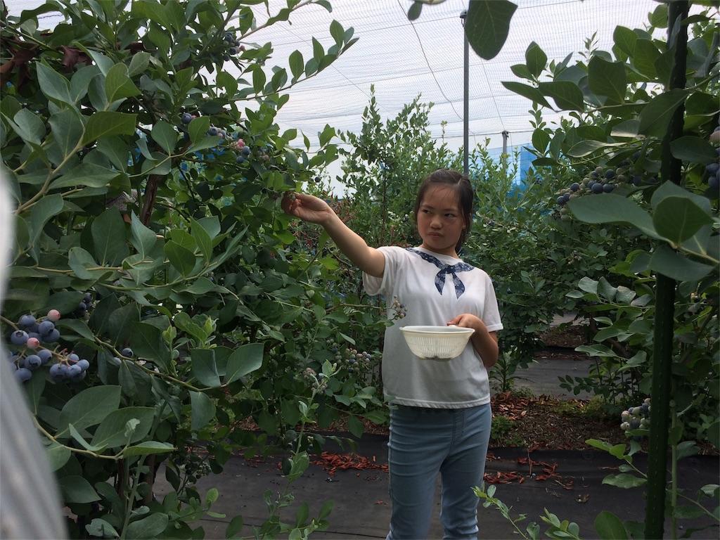 f:id:beans_mame-niwa:20170725224455j:image