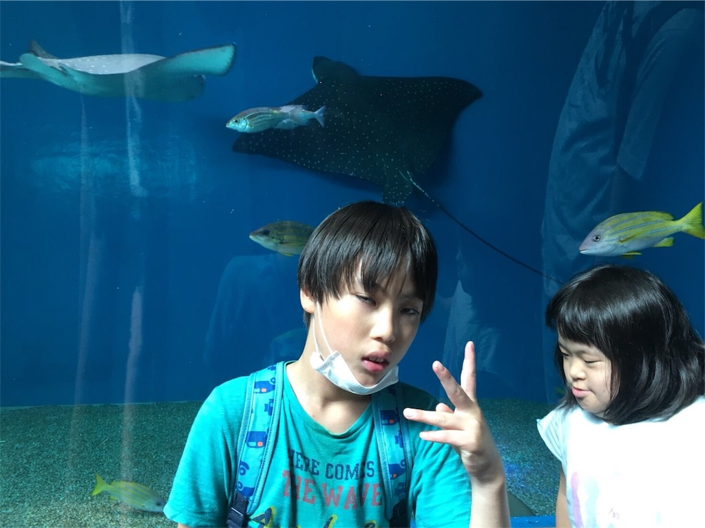 f:id:beans_mame-niwa:20180723212602j:image