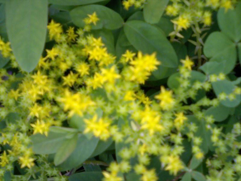 flowerstars