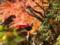 紅に染まる談山神社