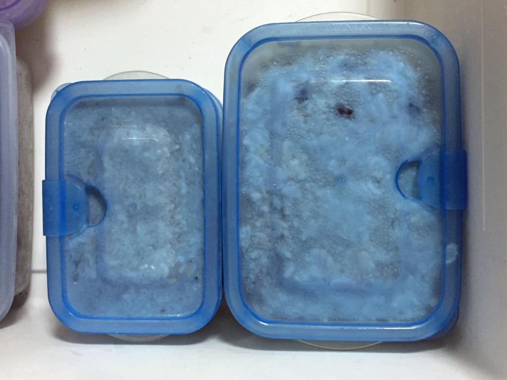 耐熱タッパーにご飯を詰めて冷凍