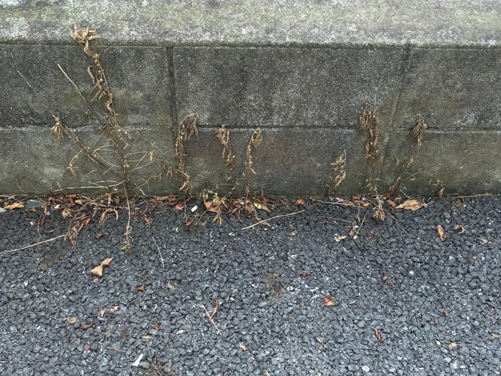 効果抜群の除草剤