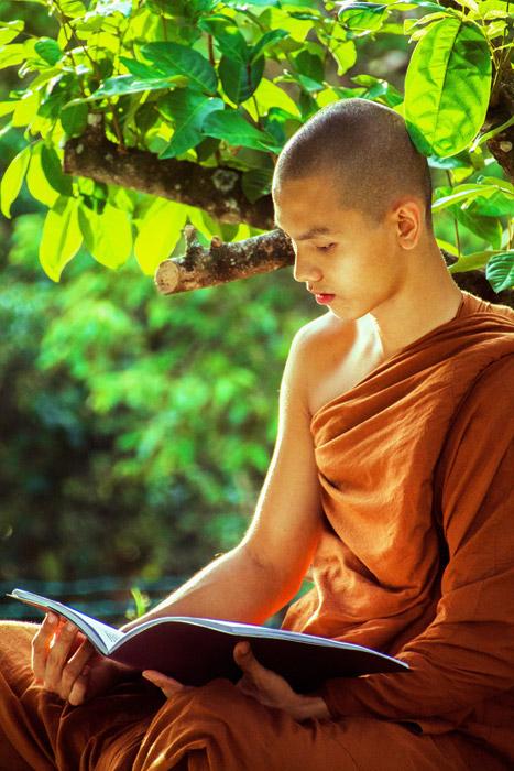 釈迦が悟りをひらいた菩提樹と若き僧侶