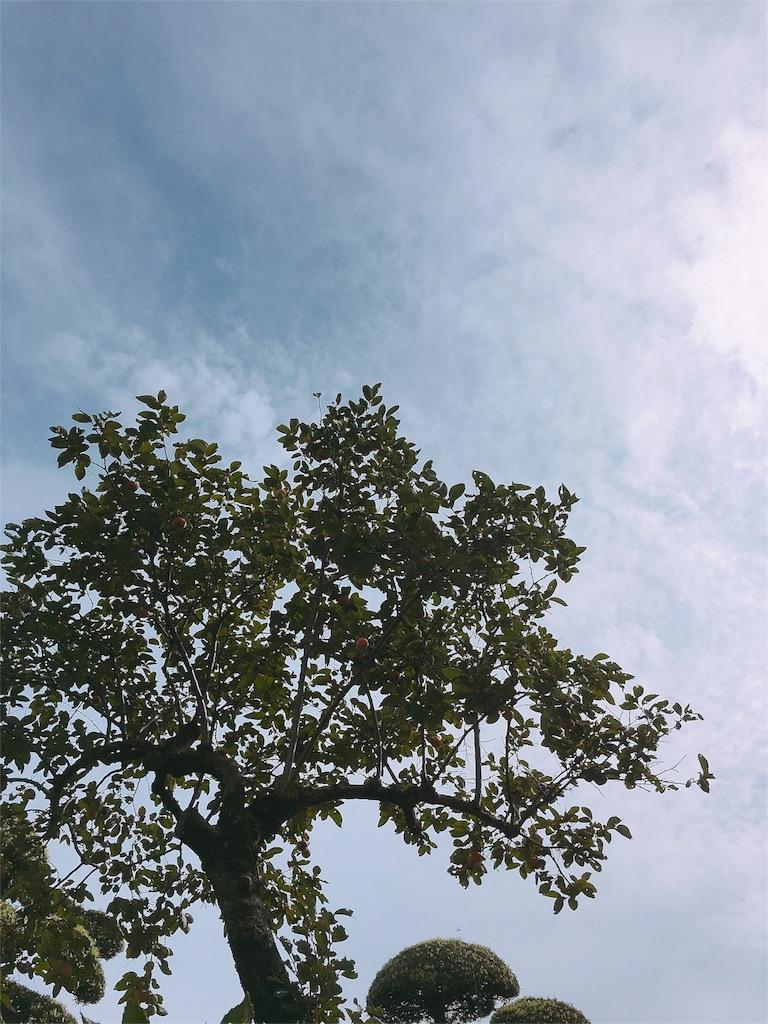 f:id:beauty-sky:20160928225215j:image