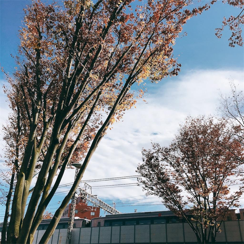 f:id:beauty-sky:20161219192825j:image