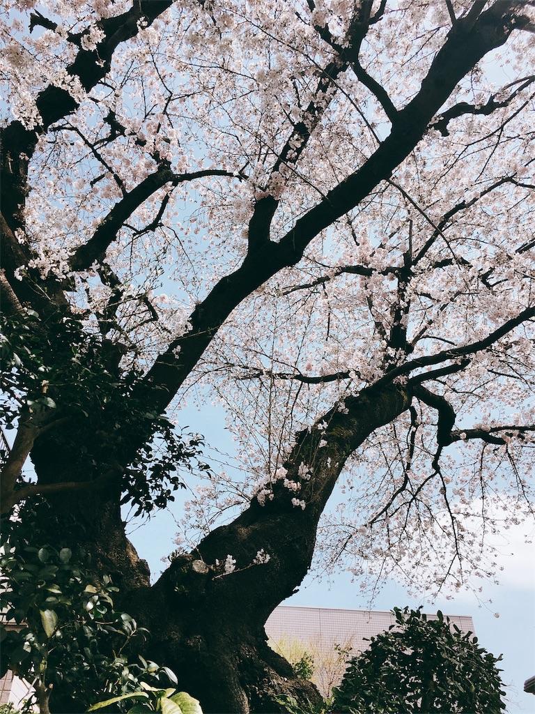 f:id:beauty-sky:20170406155314j:image