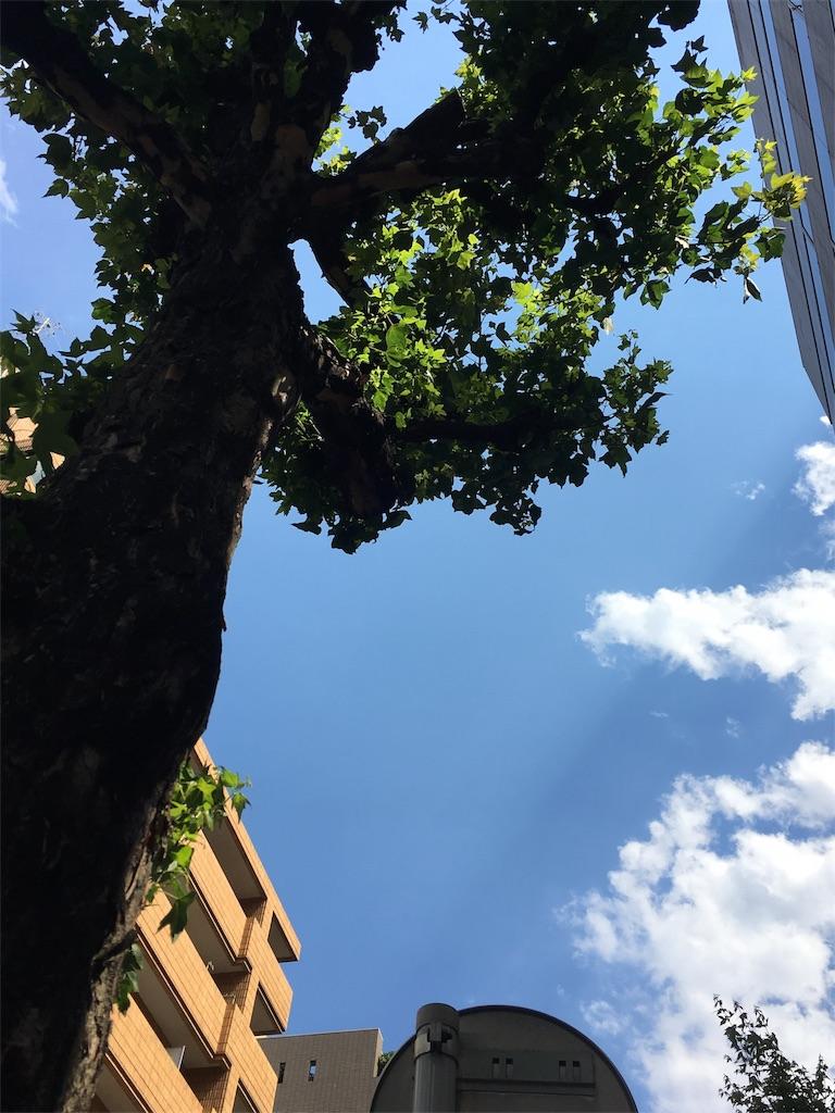 f:id:beauty-sky:20170612091132j:image