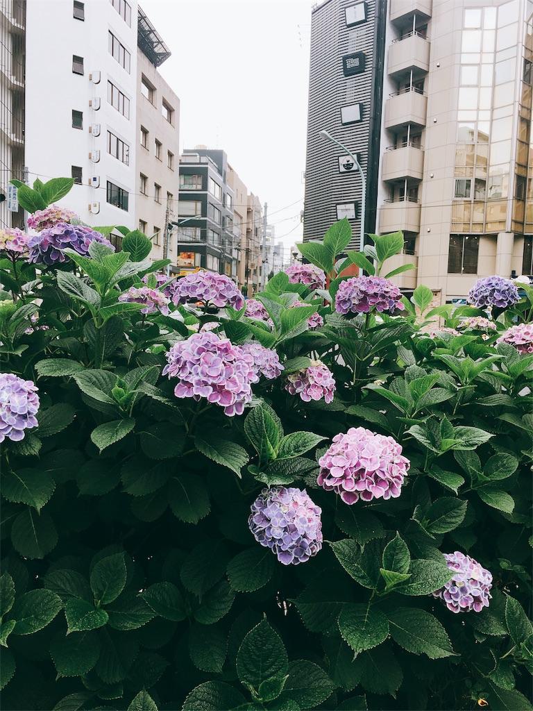f:id:beauty-sky:20170623201049j:image