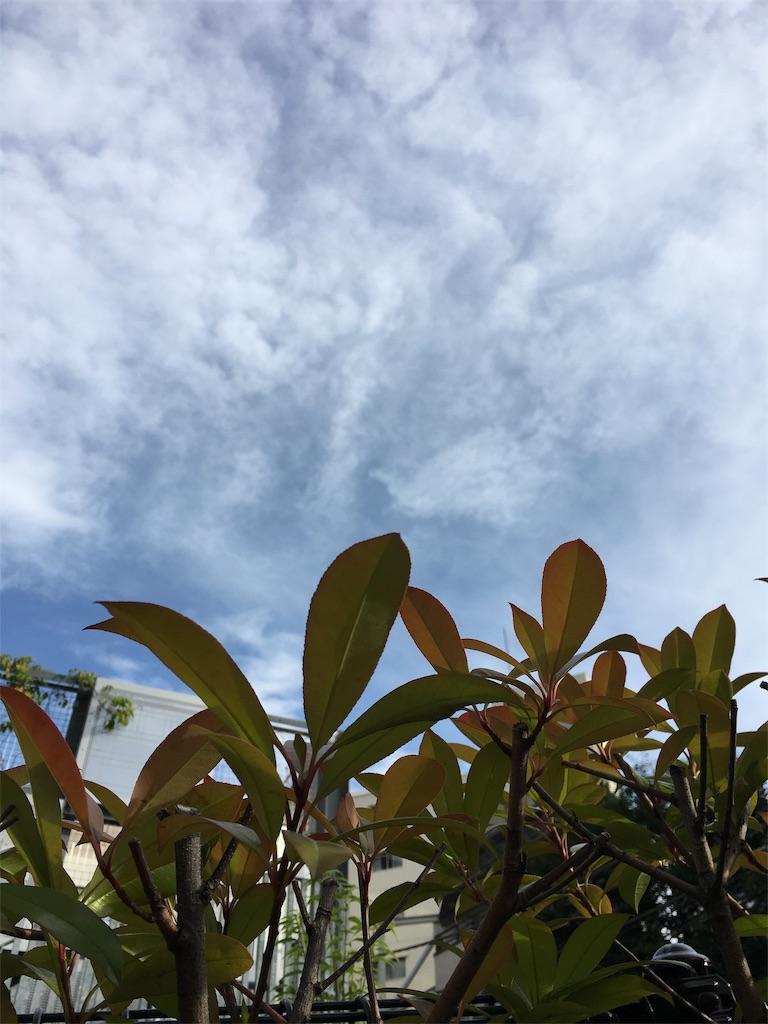 f:id:beauty-sky:20170705002515j:image