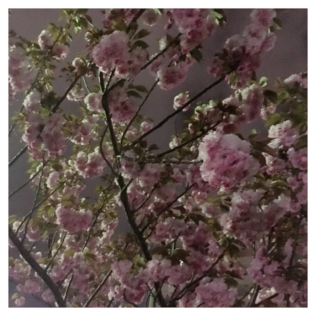 f:id:beauty_diary:20180414222355j:image