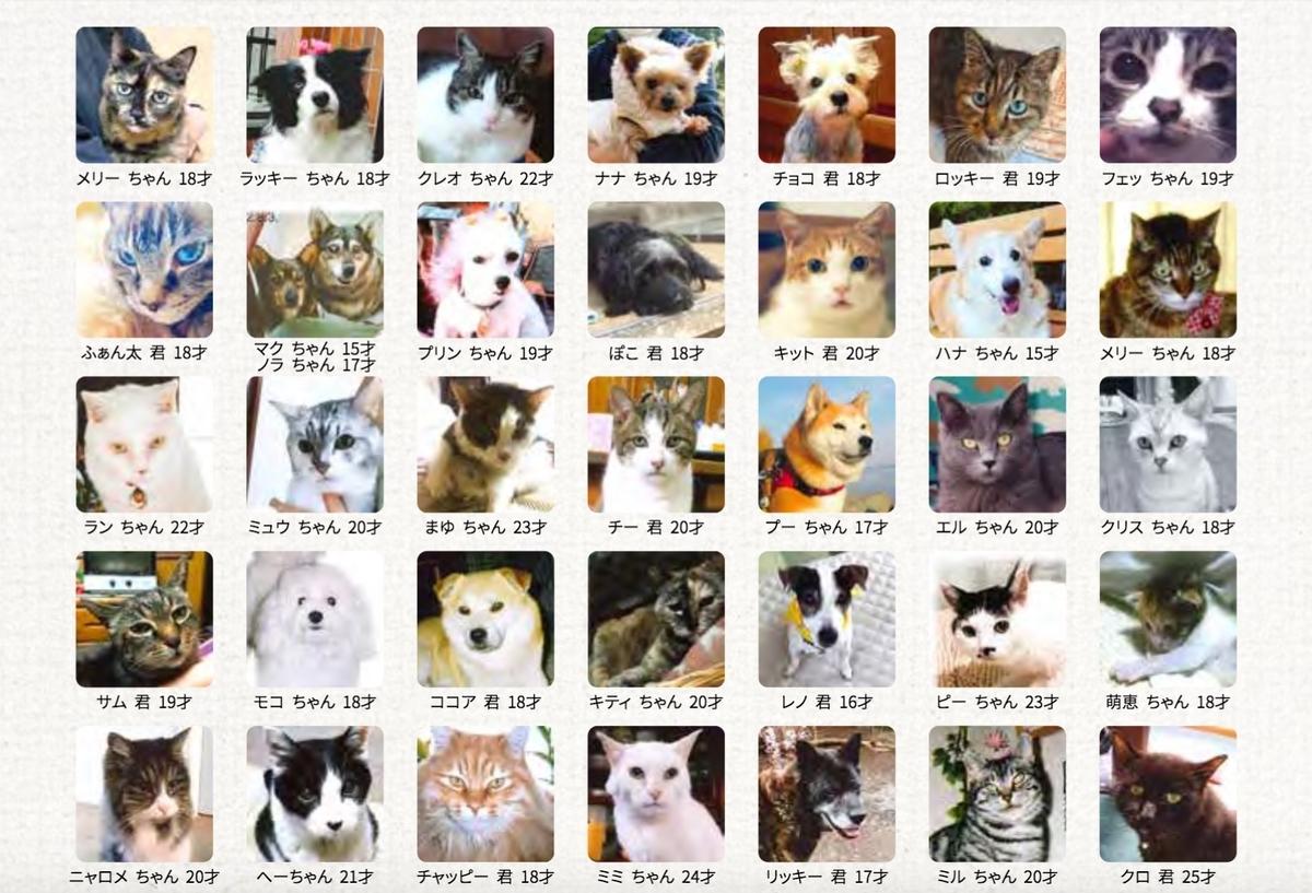 日本動物愛護協会HPに掲載された愛猫フェッちゃん