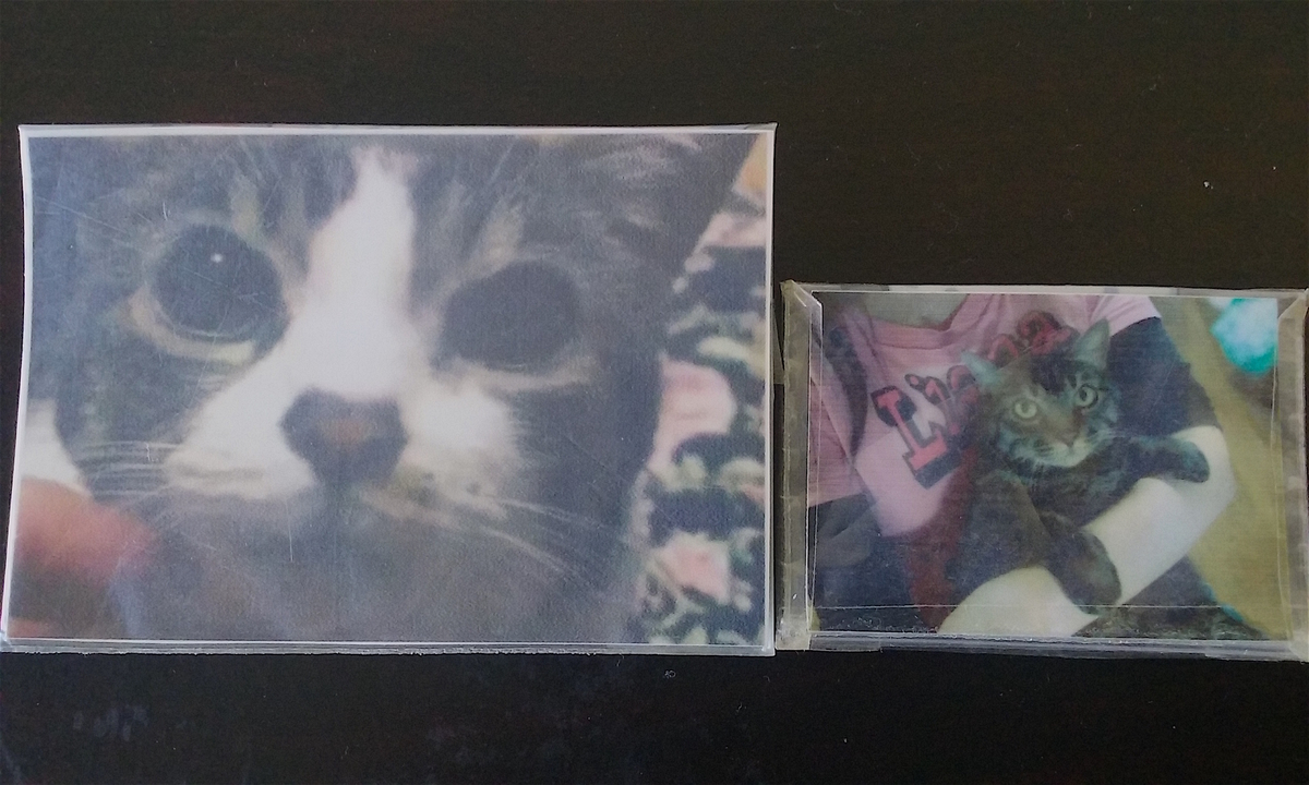 愛猫2匹の写真。