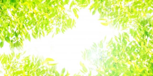 f:id:bee-dog:20210406190129j:plain
