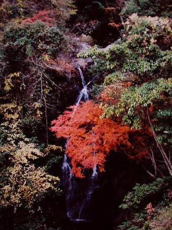 滝畑の秋 11月