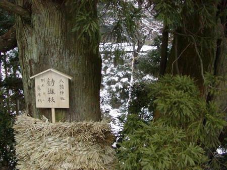 勧進杉 八幡神社1月しめ縄を張って豊作祈願