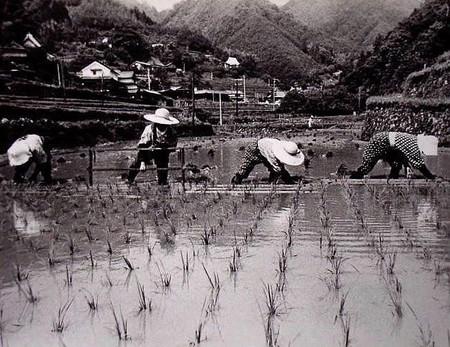 昔の田植は助け合っていた ・島の谷6月 1970年代