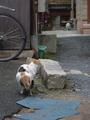 [猫][野良猫]他の猫と出会ってしまったらしい