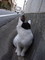 テンちゃんの後ろにも猫