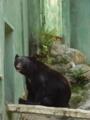 [動物園][ツキノワグマ]