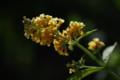 [花][黄色の花]
