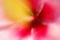 [花][ハイビスカス][ピンクの花]