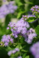 [花][紫の花]