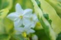 [花][白い花]