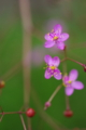 [花][ピンクの花]