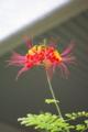 [花][赤い花]