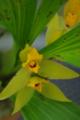 [花][黄色い花]
