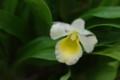 [花][白い花][蘭]