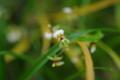 [花][黄色い花][蘭]