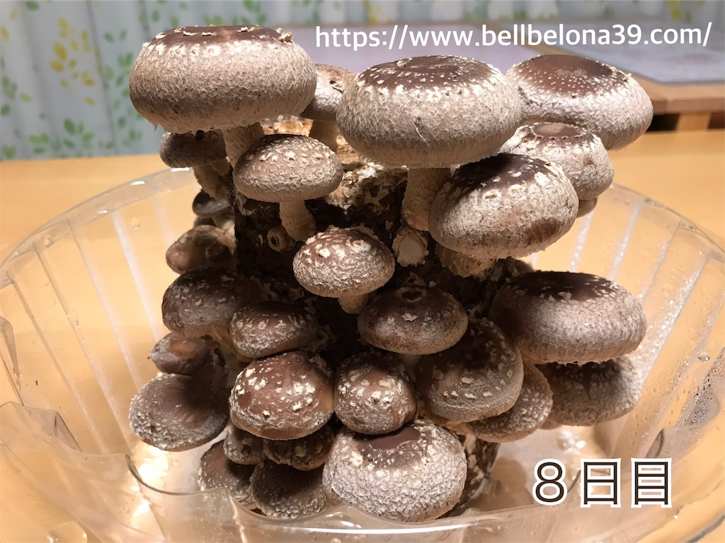 f:id:bellbelona39:20190302004422j:image