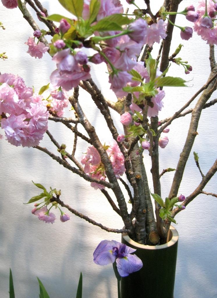 f:id:bellerose-fleuristes:20180201123706j:plain