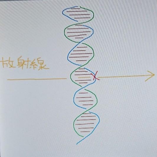 発がんと遺伝的影響に係る、被ばくと染色体の重要な関係【小中学生でも分かる確率的影響】