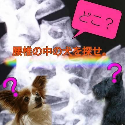 腰椎分離症の画像診断【腰椎の中にに隠れた犬を探せ?!】