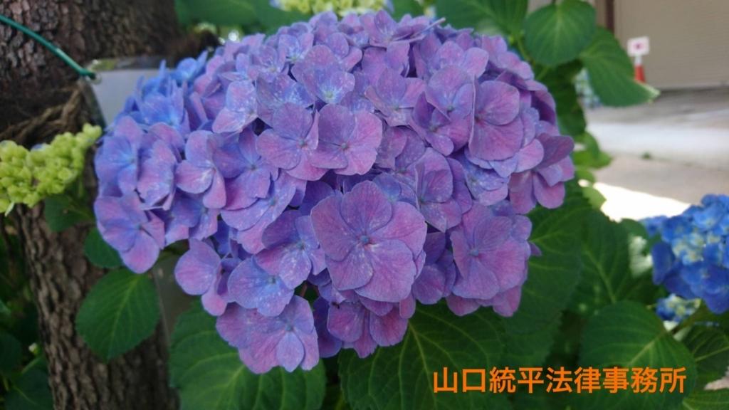 f:id:bengoshi-nagoya:20180608145301j:plain