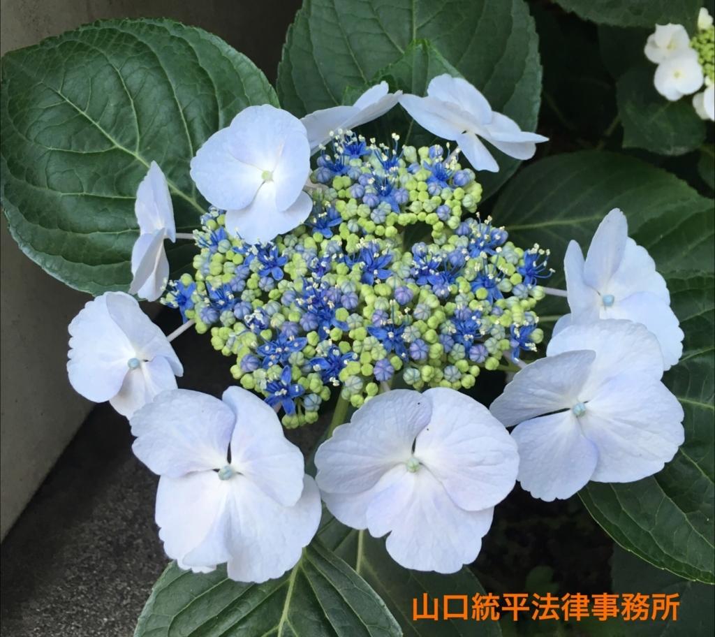f:id:bengoshi-nagoya:20180608145753j:plain