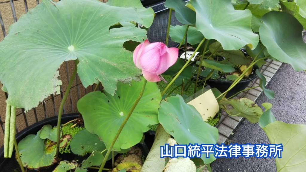 f:id:bengoshi-nagoya:20180726163043j:plain