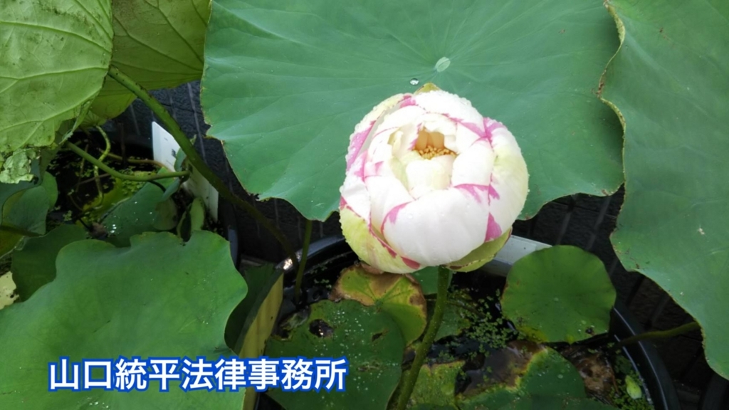 f:id:bengoshi-nagoya:20180726163056j:plain