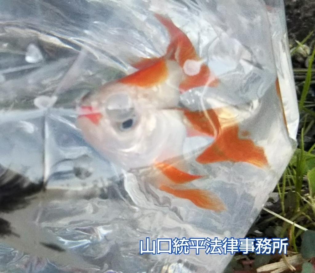 f:id:bengoshi-nagoya:20180918152023j:plain