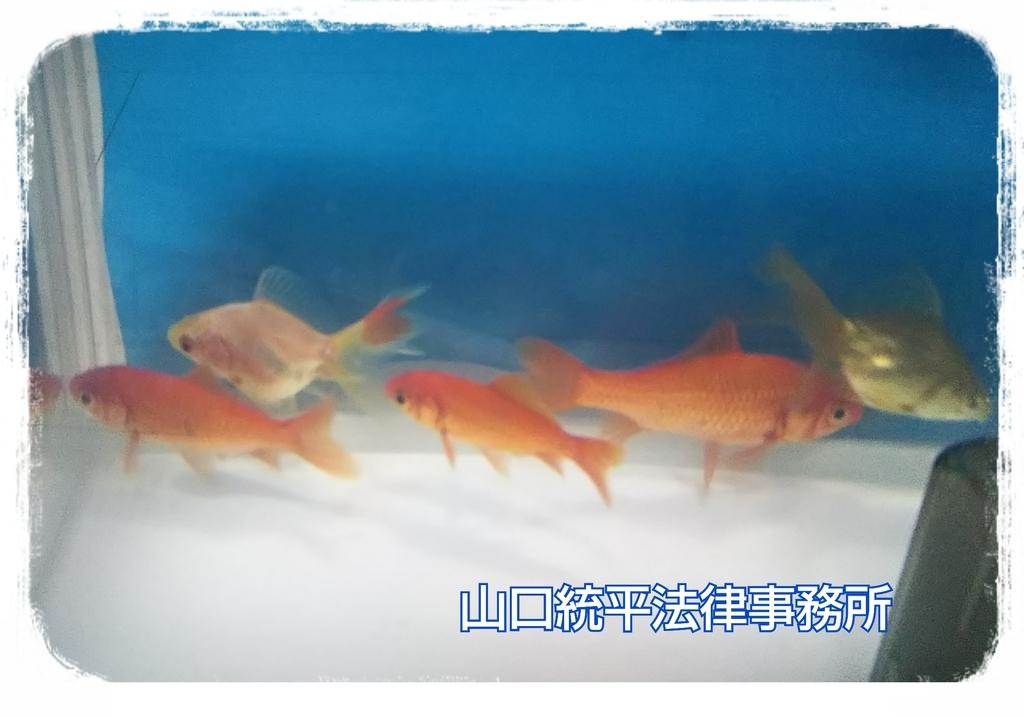 f:id:bengoshi-nagoya:20180918163648j:plain