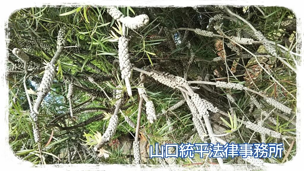 f:id:bengoshi-nagoya:20181120060546j:plain