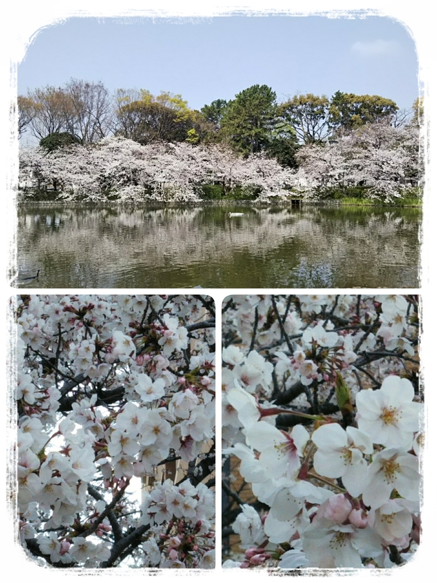 f:id:bengoshi-nagoya:20190408202832j:plain