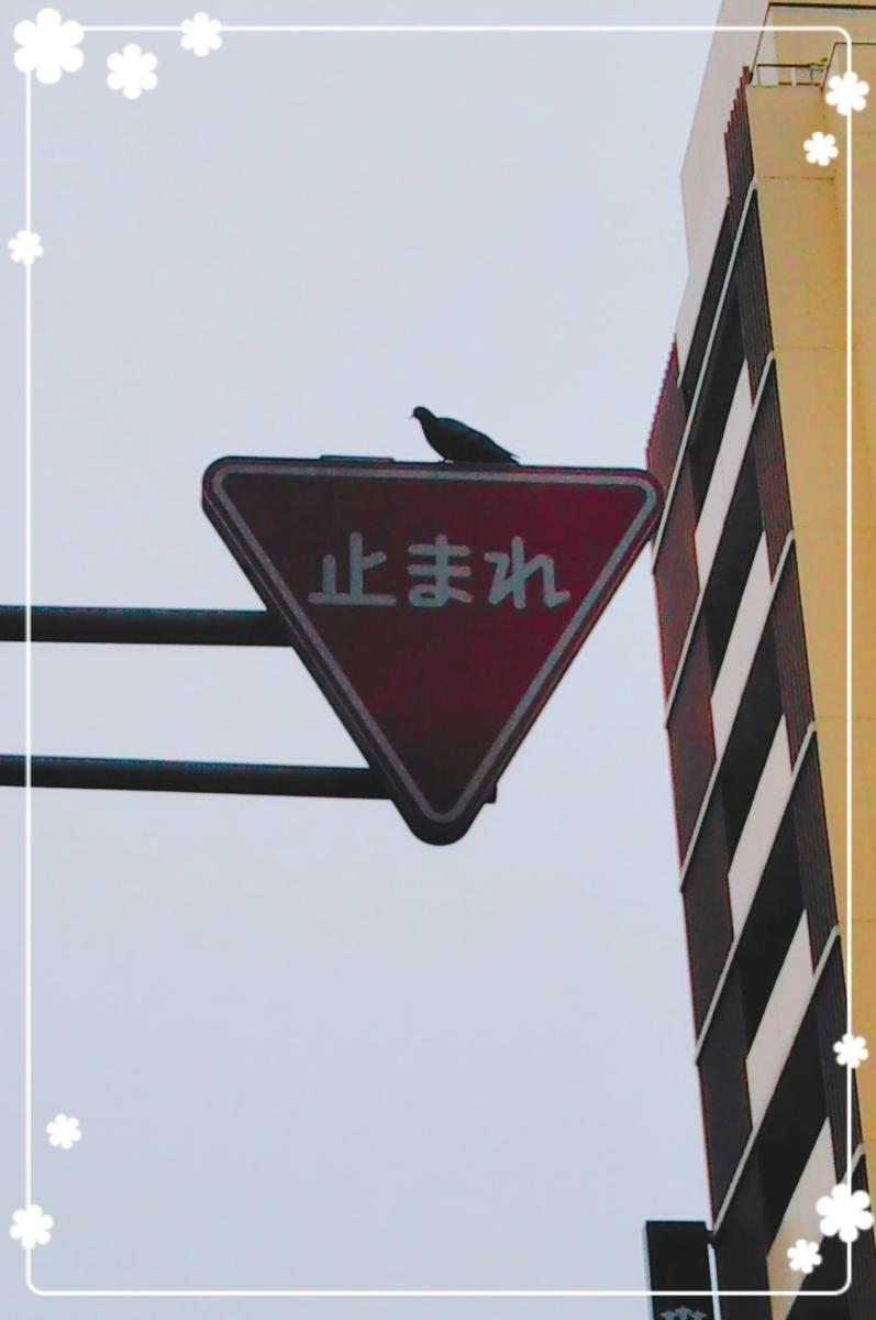 f:id:bengoshi-nagoya:20190623224842j:plain