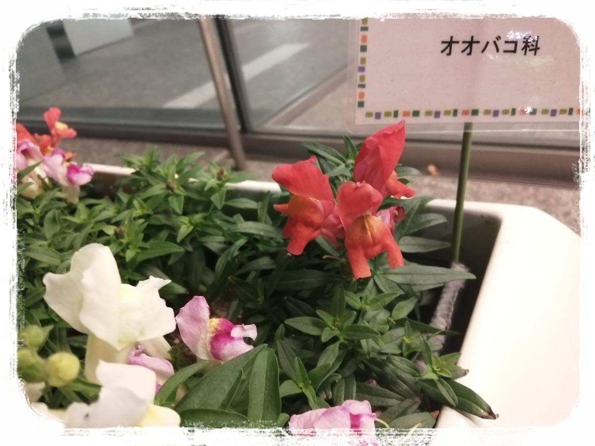 f:id:bengoshi-nagoya:20191219114102j:plain