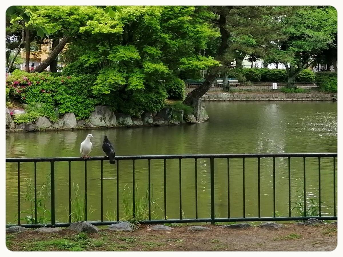f:id:bengoshi-nagoya:20200505001104j:plain