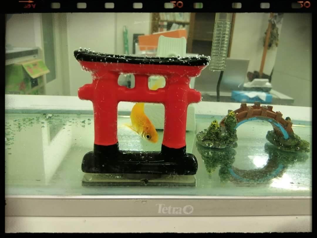 f:id:bengoshi-nagoya:20210706220423j:plain